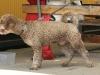 sommar-2011-219-1280x853