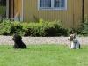 sommar-2011-236-1280x853