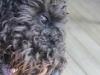sommar-2011-029-853x1280